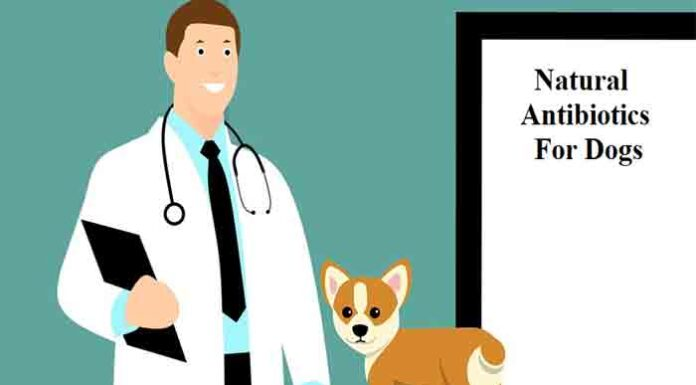 Natural Antibiotics for dogs